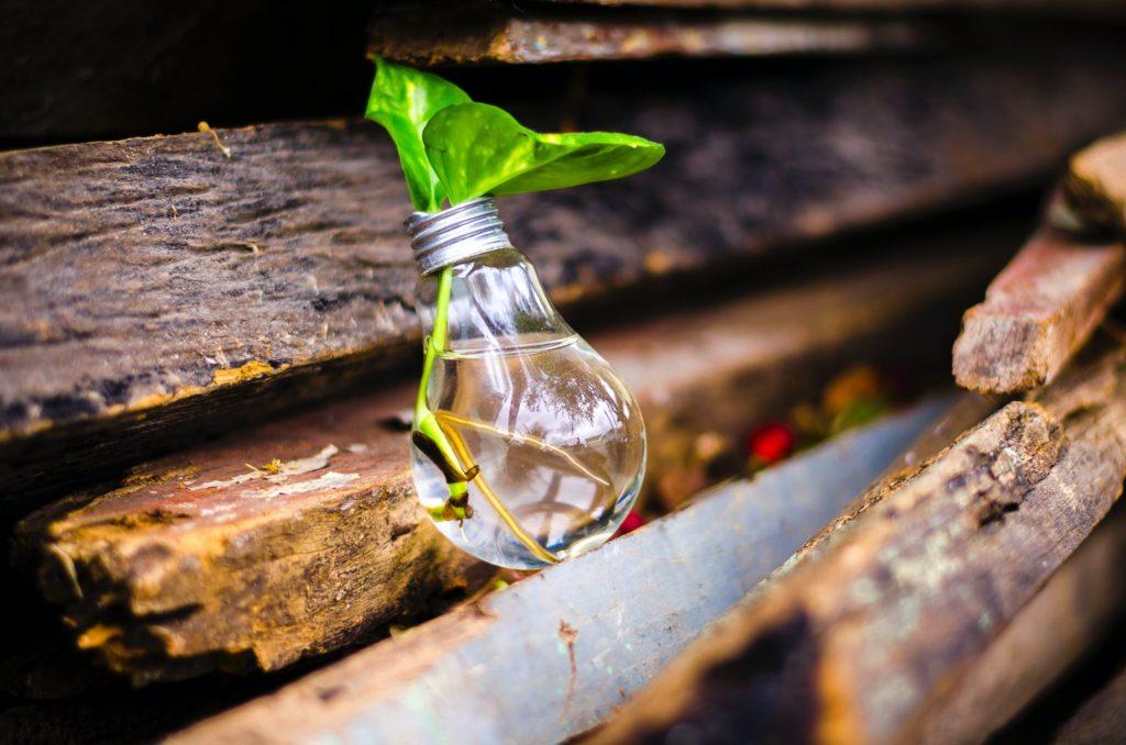 Auch beim Klimaschutz: Marktwirtschaft undTechnologieoffenheit statt Brandenburger Planwirtschaft